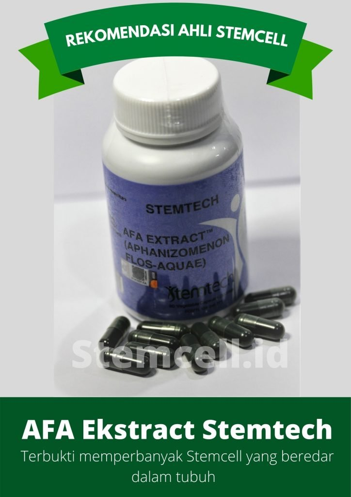 terapi stemcell afa extract